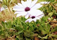 Imagínese la belleza de las flores imagen de archivo libre de regalías