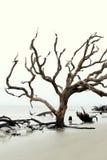 Image émotive des arbres, nu dépouillé des éléments, plage de bois de flottage, île de Jekyll, 2015 Photo stock