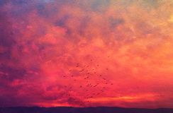 Image of abstract clouds and sky with texture. birds flying and sunset colors. Image of abstract clouds and sky with texture. birds flying and sunset colors Royalty Free Stock Image