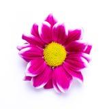 Image abstraite douce de fleur vive photos libres de droits