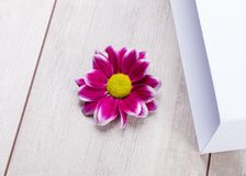 Image abstraite douce de fleur vive photo libre de droits