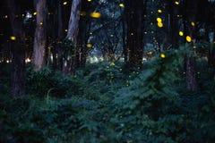 Image abstraite et magique du vol de luciole dans la forêt de nuit Images libres de droits