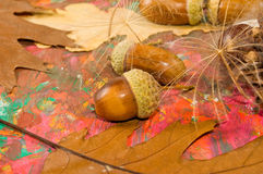 Image of acorn, chestnut and bumpon on a multicolored background close up Stock Photo