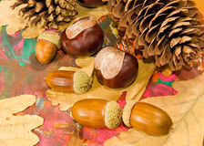 Image of acorn, chestnut and bumpon on a multicolored background close up Royalty Free Stock Image