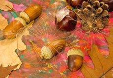 Image of acorn, chestnut and bumpon on a multicolored background closeup Royalty Free Stock Photo