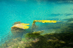 Image of algae under turquoise water Stock Photography
