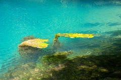 Image of algae under turquoise water Stock Photography
