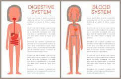 Image anatomique digestive et de sang de système de couleur illustration libre de droits