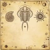Image of ancient marine organisms: trilobit,  mollusk,  radiolaria. A background - imitation of old paper. Vector illustration Royalty Free Stock Photo