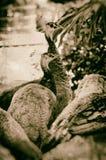 Image antiqued par Faux des paonnes regardant loin image stock