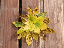 Image of arrangement of colorful aurumn leaves on wooden background stock images