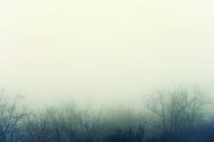 Image artistique de brouillard mystérieux au-dessus d'une forêt nue Photos libres de droits