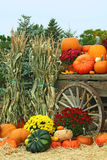 Image of Autumn. This is a beautiful image of Autumn, with pumpkins, cornstalks, gourds, and chrysanthemums Stock Photos