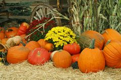 Image of Autumn. This is a beautiful image of Autumn, with pumpkins, cornstalks, gourds, and chrysanthemums Royalty Free Stock Photo