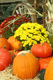 Image of Autumn. This is a beautiful image of Autumn, with pumpkins, cornstalks, gourds, and chrysanthemums Royalty Free Stock Images