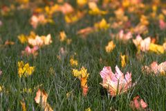 An autumn leaves royalty free stock image