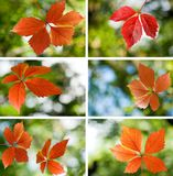 image of autumn leaves close-up Royalty Free Stock Photography