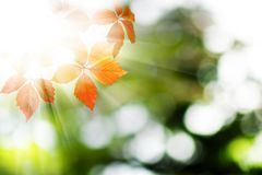 image of autumn leaves close-up Stock Image