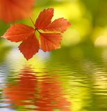 image of autumn leaves over the water close-up Stock Photos