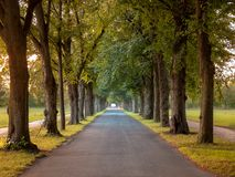 Image of avenue with trees and empty road in autumn stock photos
