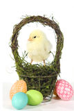 Image With Baby Chicks and Eggs Stock Photography