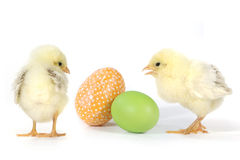 Image With Baby Chicks and Eggs Stock Photos