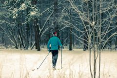 Image from back of skier athlete in forest at winter Royalty Free Stock Image