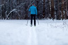 Image from back of skier athlete in forest at winter Royalty Free Stock Images