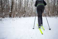Image from back of skier with sticks. On background of winter forest Stock Images