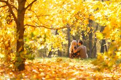 Image from back of young couple in love in woods. Among trees royalty free stock images