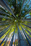 An Image of Bamboo Forest Royalty Free Stock Photo