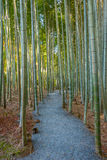 An Image of Bamboo Forest Royalty Free Stock Photos