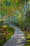 An Image of Bamboo Forest Stock Photo