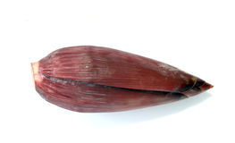 Image of banana blossom Stock Image