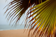 Image of beach through palm tree leaves Royalty Free Stock Photography