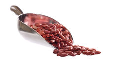 Image of the beans on the shovel Royalty Free Stock Image