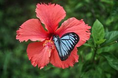 Image of Beautiful Butterfly Landing Sitting on Flower stock image