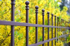 Image of a Beautiful decorative metal fence with artistic forging on a against spring flowers background. Iron guardrail close up.  Stock Photo