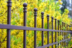 Image of a Beautiful decorative metal fence with artistic forging on a against spring flowers background. Iron guardrail close up.  Royalty Free Stock Photography