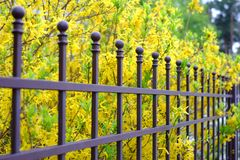 Image of a Beautiful decorative metal fence with artistic forging on a against spring flowers background. Iron guardrail close up.  Royalty Free Stock Photos