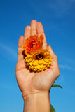 Image of beautiful flower in hand. Outdoors Stock Photos