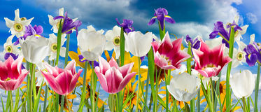 Image of beautiful flowers against the sky close-up Royalty Free Stock Photos