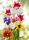 Image of beautiful flowers against the sun Stock Image