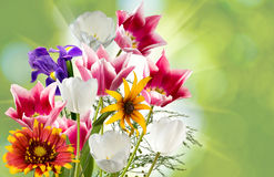 Image of beautiful flowers against the sun close-up Royalty Free Stock Photos