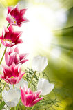 Image of beautiful flowers against the sun closeup Royalty Free Stock Photo