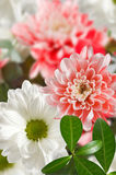 Image of beautiful flowers in a park close-up Royalty Free Stock Photography