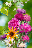 Image of beautiful flowers in a park close-up Royalty Free Stock Photo