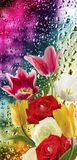 Image of beautiful flowers on wet glass background close-up Stock Photos