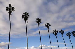 Image of beautiful palm trees Stock Photos