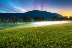 Spring Landscape with A Meadow of Yellow Buttercups, Trees Covered in Fog and Mountain at Twilight stock images